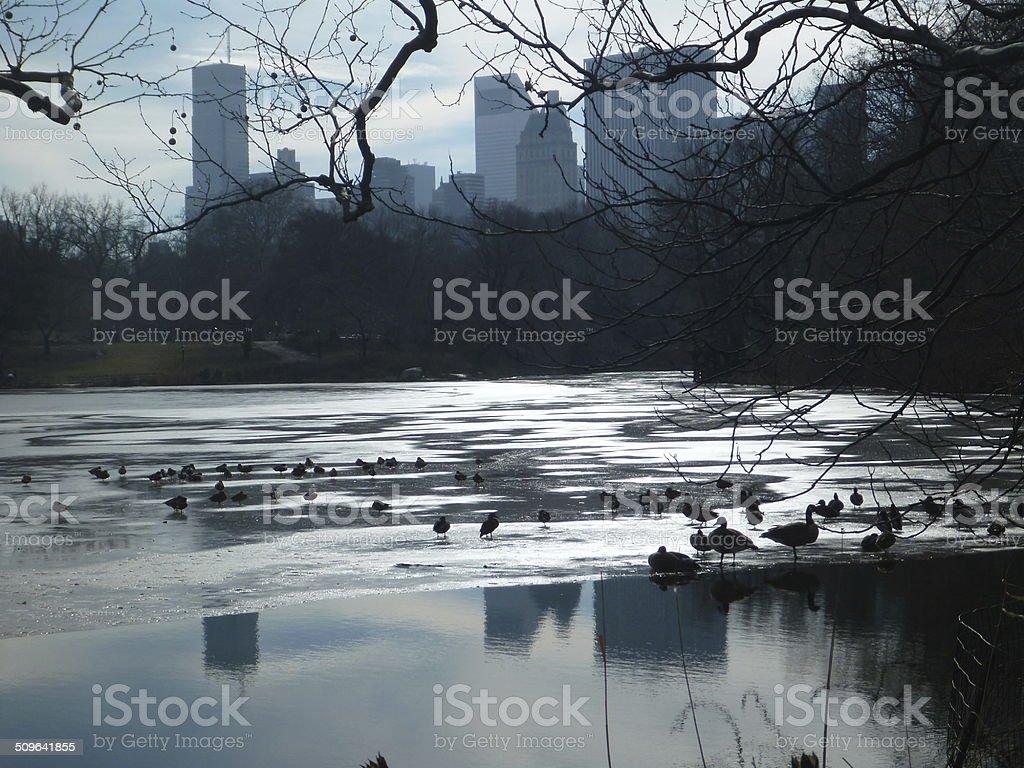 Central Park Lake Frozen in Winter stock photo