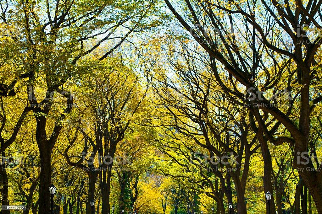 Central Park Literary Walk in Autumn stock photo