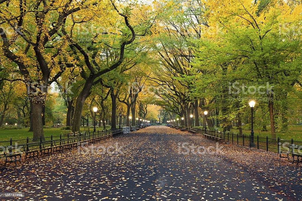 Central Park. stock photo