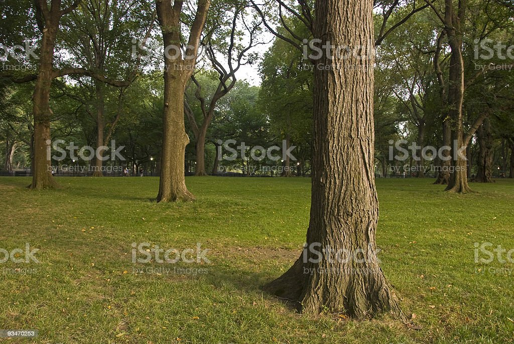 Central Park Tree Background stock photo