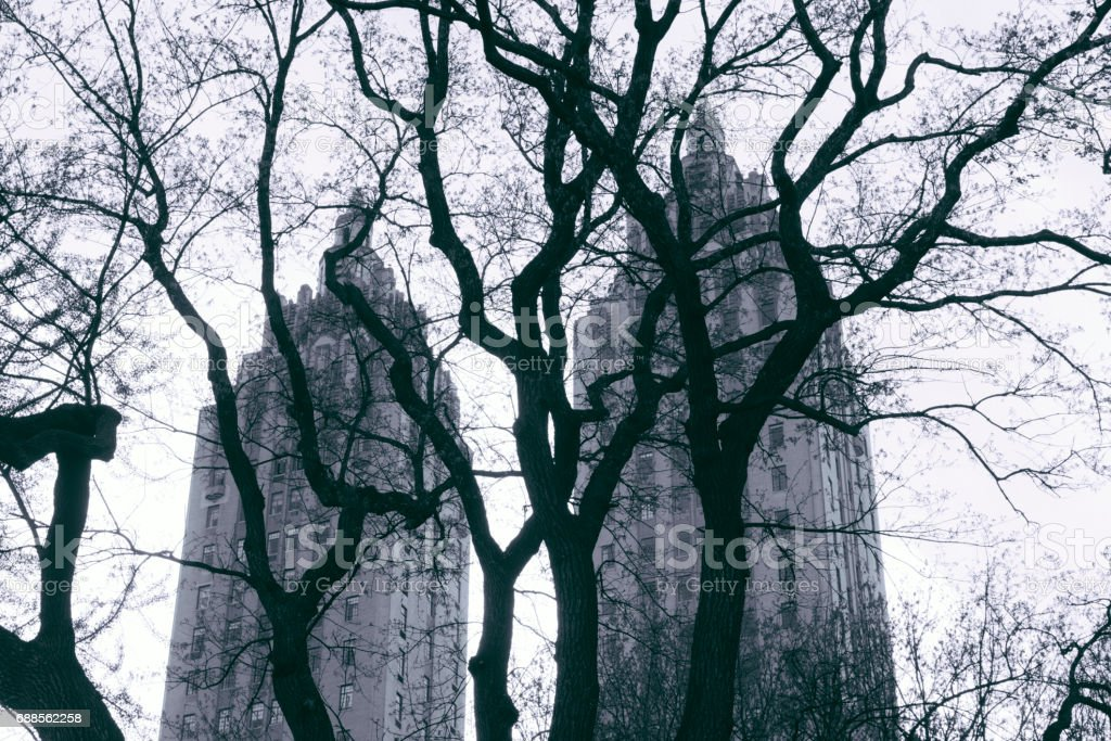 Central Park Tree Branches with Landmark Architecture in NYC stock photo