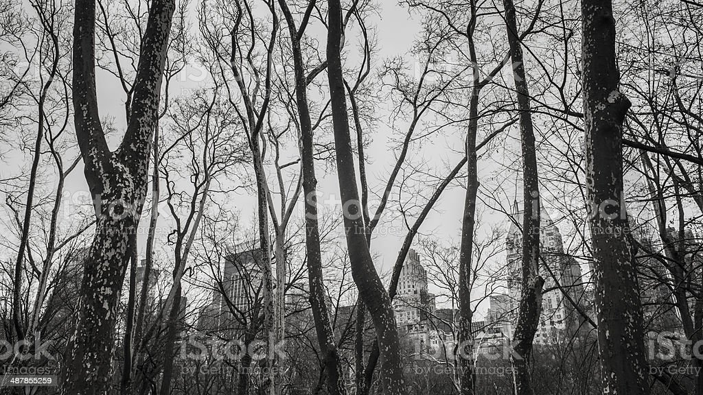 Central Park Trees stock photo