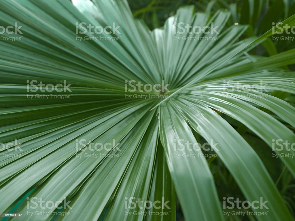 central sprouting leaf royalty-free stock photo