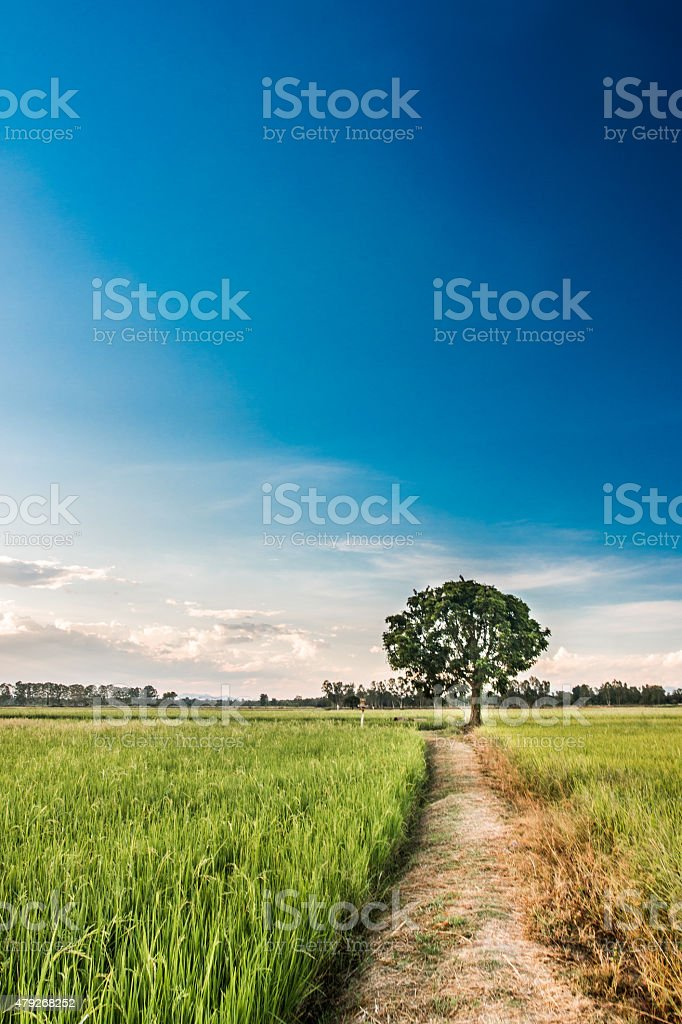 Central trees, lush fields stock photo