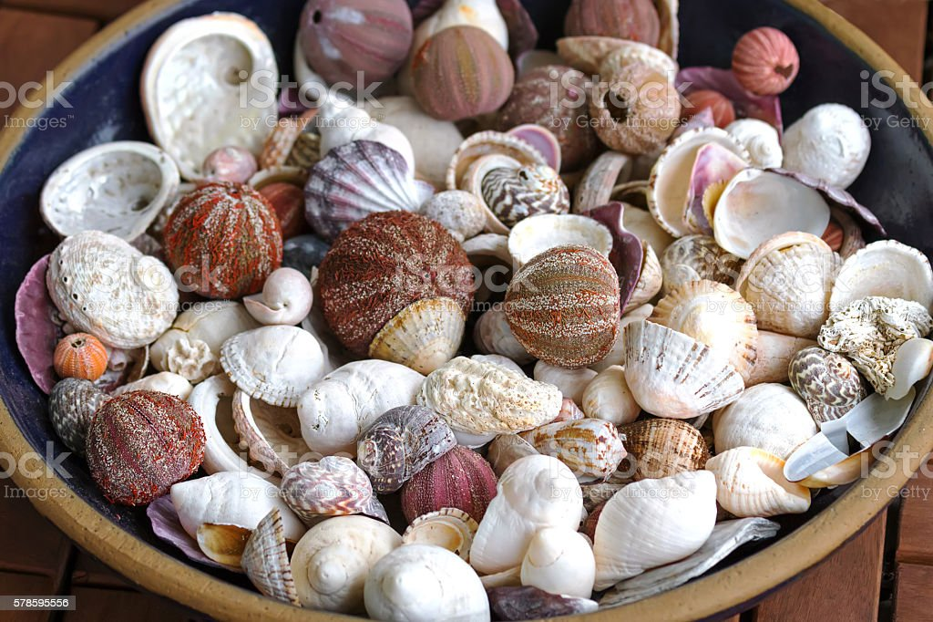 Ceramic bowl full of sea urchin and other seashells stock photo