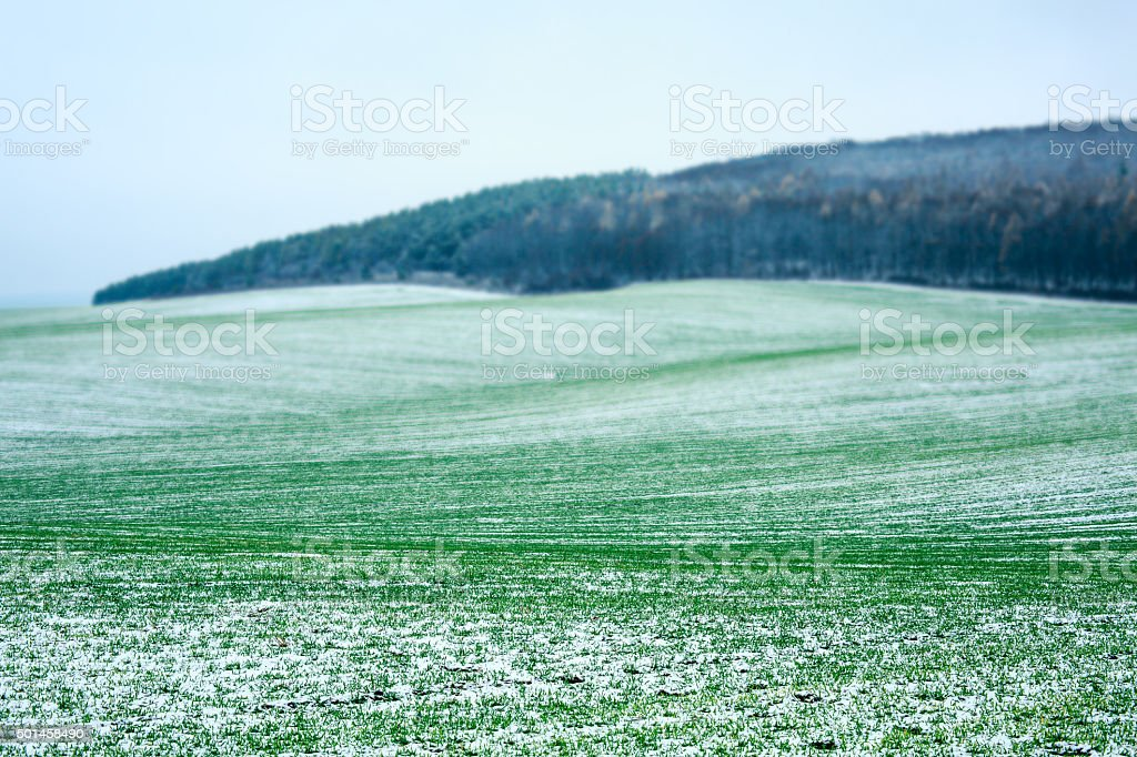 Cereal field stock photo