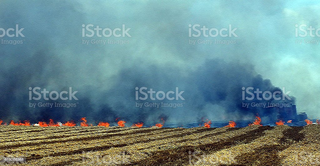 cereal plant stock photo