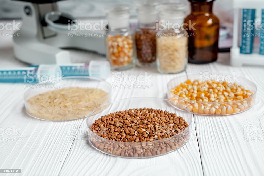 cereals in petri dish for analysis on wooden background stock photo