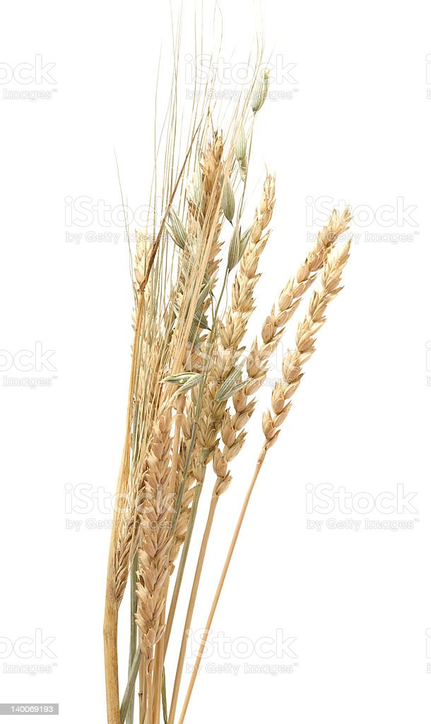 Cereals. royalty-free stock photo