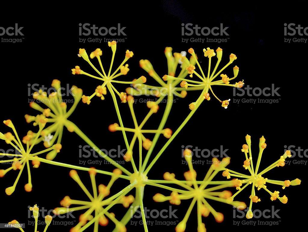 Cerebral nature stock photo