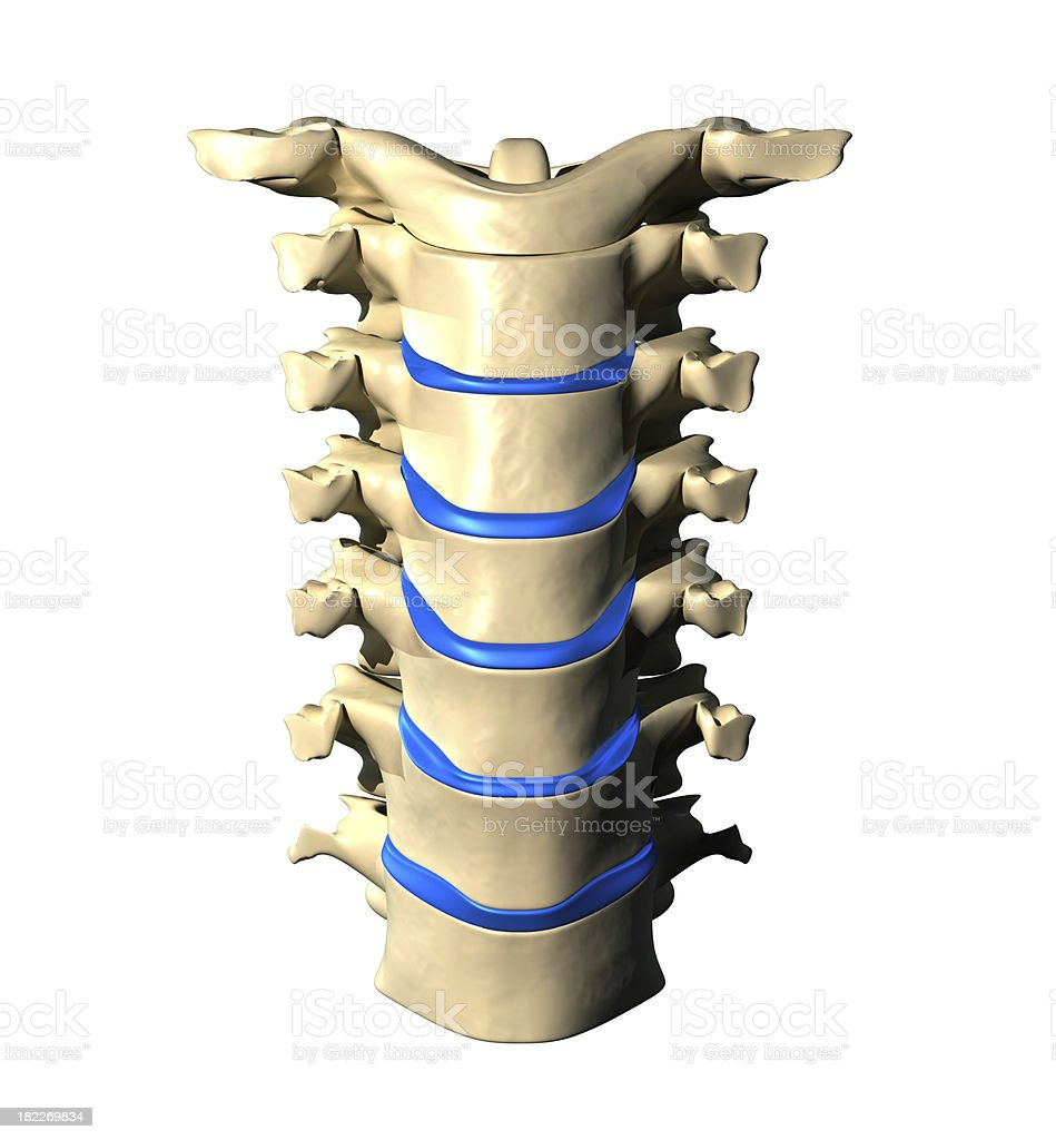 Cervical Spine - Anterior Front view royalty-free stock photo