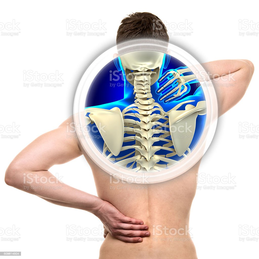 Cervical Spine isolated on white - REAL Anatomy concept stock photo