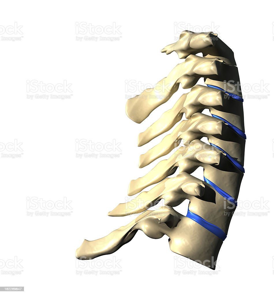 Cervical Spine - Lateral view royalty-free stock photo