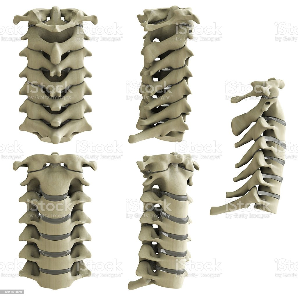 Cervical vertebrae-5 views XXXL stock photo
