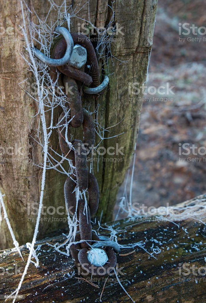 chain in winter forest stock photo