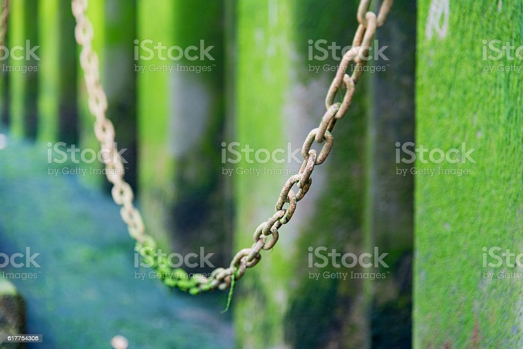 Chain links covered in green water weed with selective focus stock photo