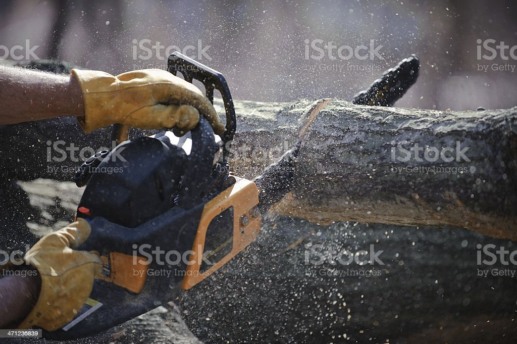 Chain saw cuts a fallen tree stock photo