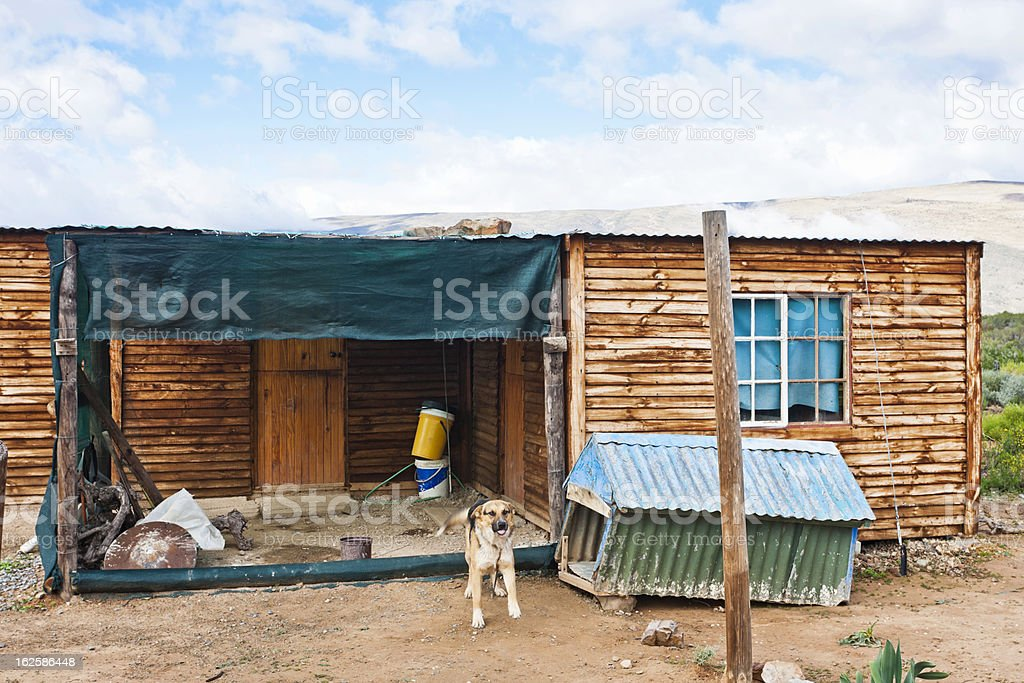 Chained dog on guard outside rural wooden shack royalty-free stock photo
