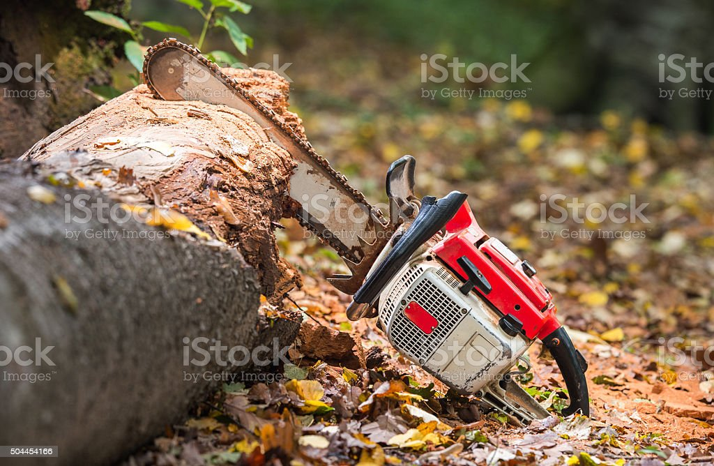 chainsaw and tree trunks stock photo