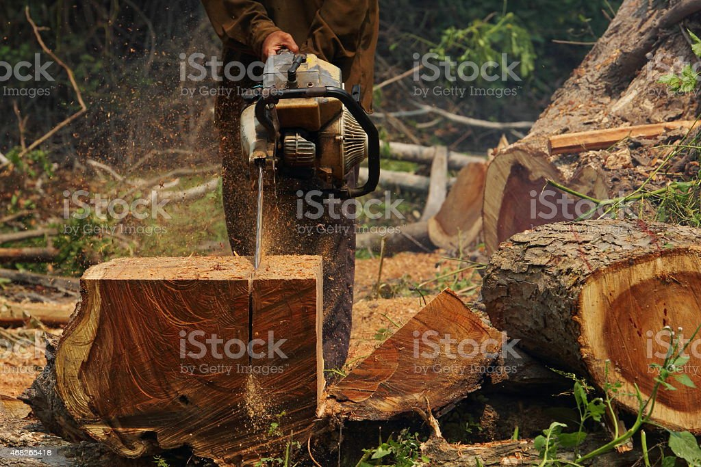 Chainsaw cutting the wood stock photo