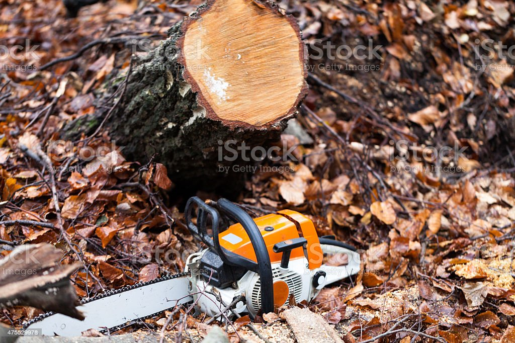 Chainsaw in the forest stock photo