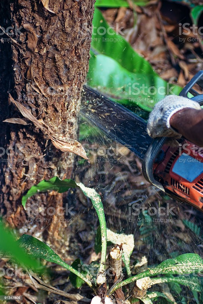 Chainsaw in the rainforest royalty-free stock photo