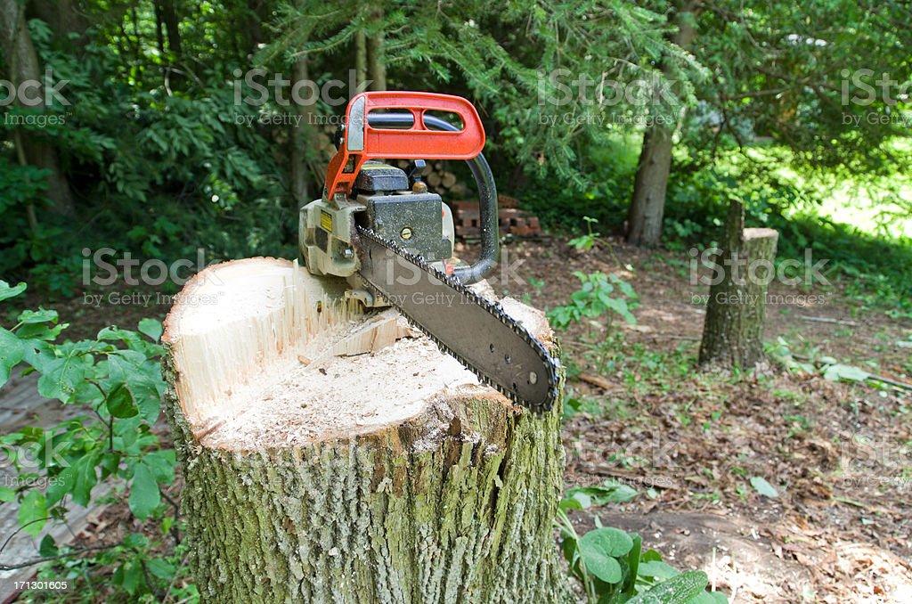 Chainsaw on Tree Stump stock photo
