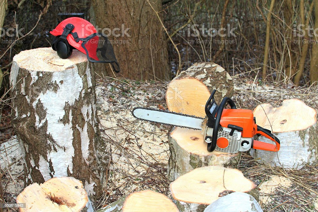 Chainsaw, safety equipment and cutting tree in forest stock photo