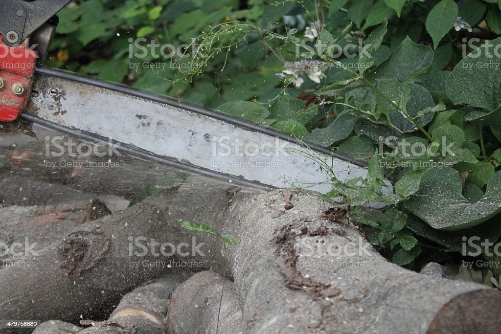 Chainsawing fire wood with sawdust flying stock photo
