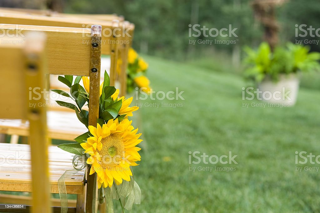 Chairs on Lawn Sunflowers and Ribbons Decorations for Wedding Ceremony royalty-free stock photo