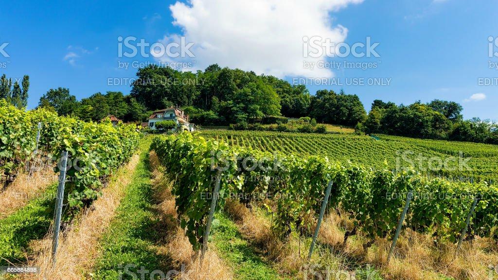 Chalet and Lavaux Vineyard Terraces trail Lavaux Oron Switzerland stock photo