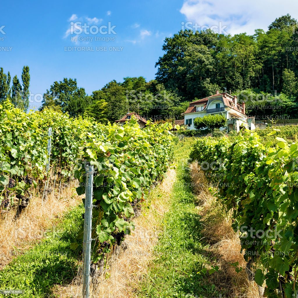 Chalet in Lavaux Vineyard Terraces hiking trail of Swiss stock photo