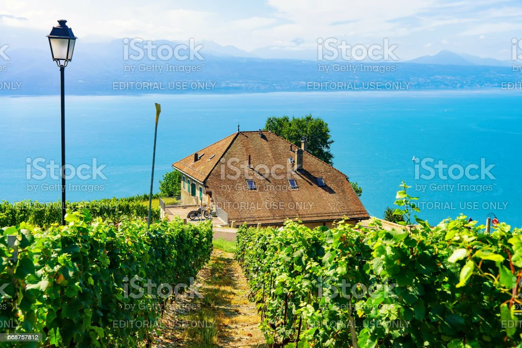 Chalets at Vineyard Terrace hiking trail of Lavaux of Switzerland stock photo