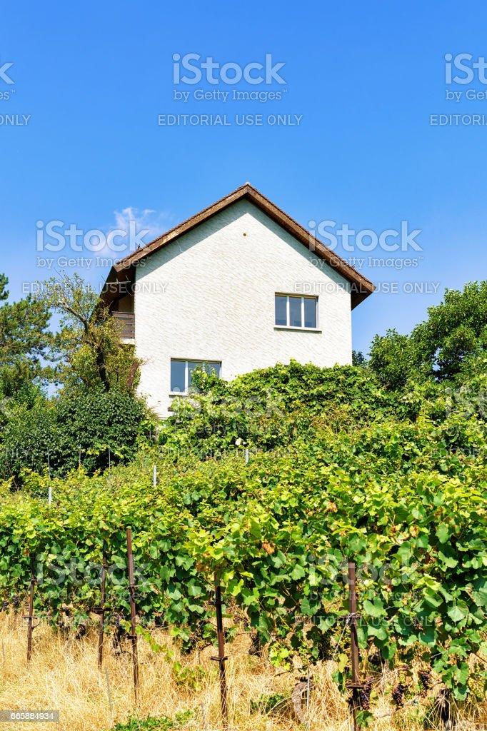 Chalets in Lavaux Vineyard Terraces in Lavaux Oron Switzerland stock photo