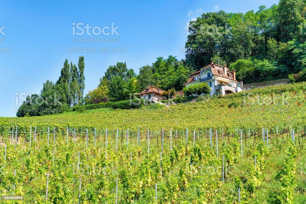 Chalets near Lavaux Vineyard Terraces of Lavaux Oron Switzerland stock photo