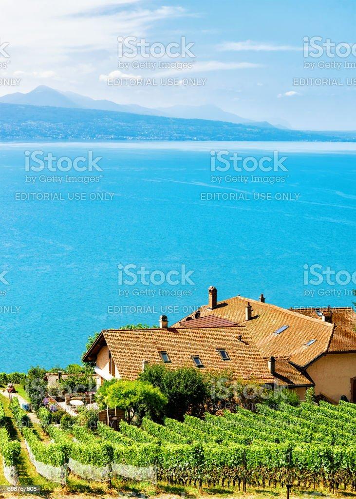 Chalets near Vineyard Terraces hiking trail of Lavaux in Switzerland stock photo