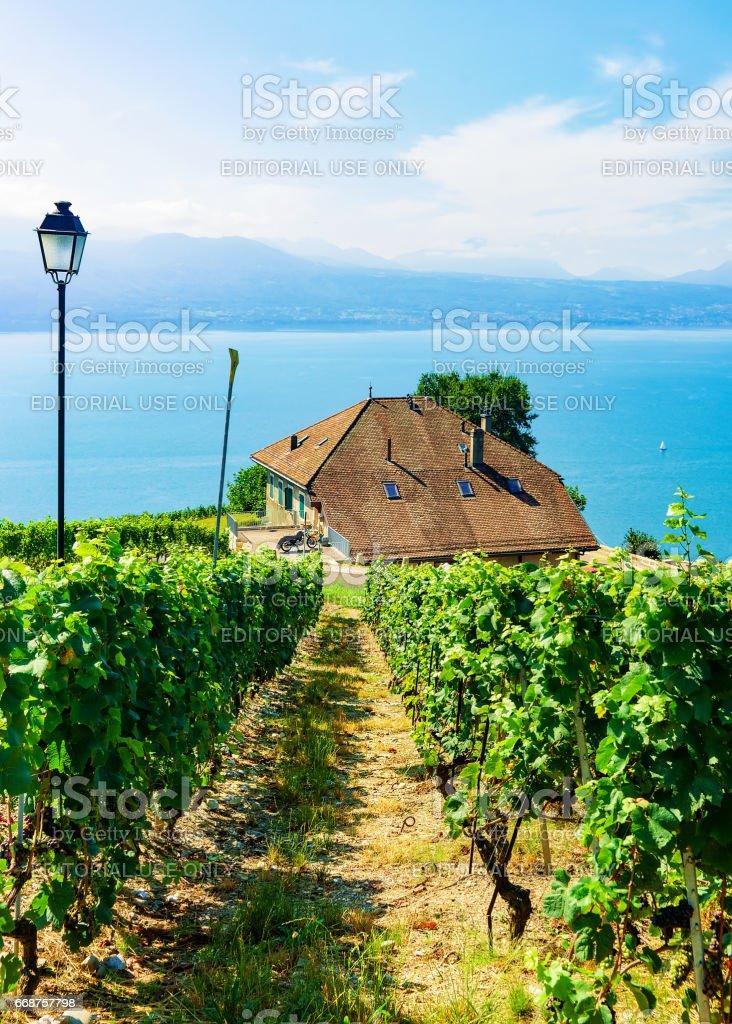 Chalets near Vineyard Terraces hiking trail of Lavaux of Switzerland stock photo