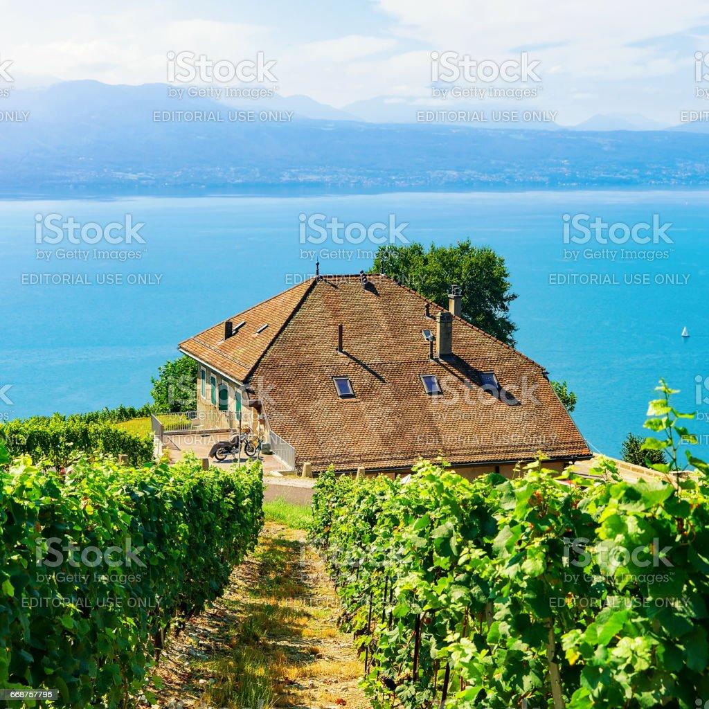 Chalets on Vineyard Terrace hiking trail of Lavaux of Switzerland stock photo
