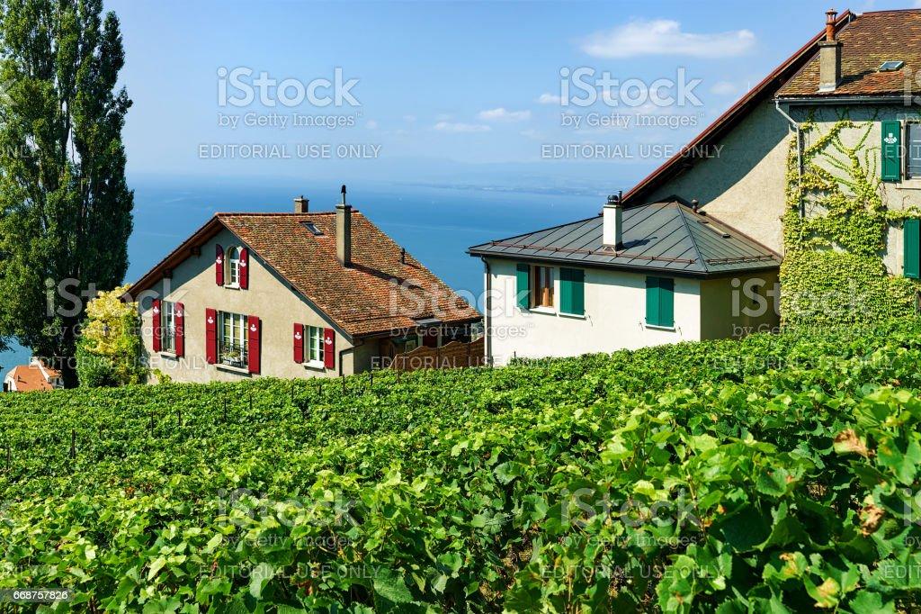 Chalets on Vineyard Terrace hiking trail of Lavaux Swiss stock photo