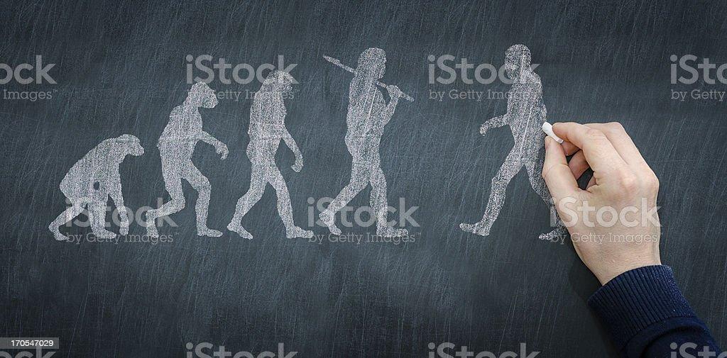 Chalkboard illustration of progression of evolution stock photo
