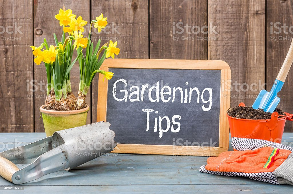 Chalkboard on a plant table with the text Gardening Tips stock photo