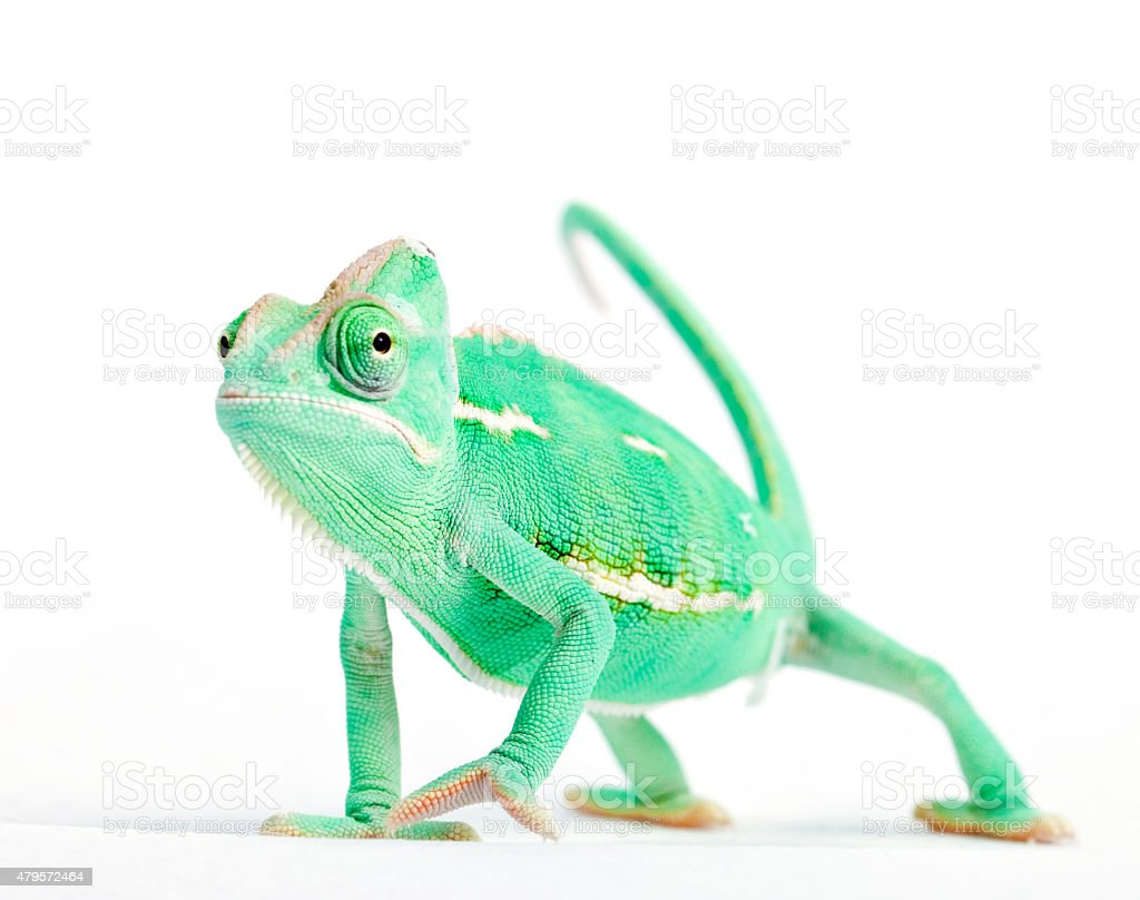 Chameleon changing skin worried expression stock photo