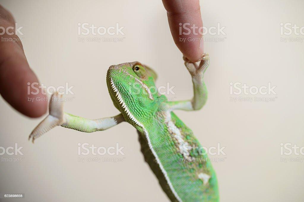 Chameleon handshake stock photo