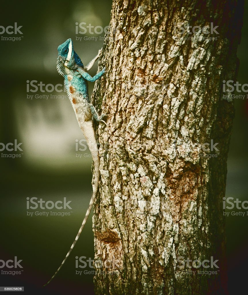 Chameleon on the tree, The white chameleon vintage style. stock photo