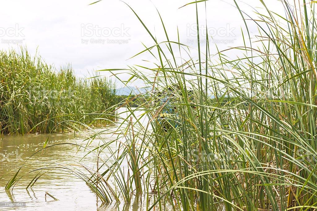 Chamo Lake stock photo
