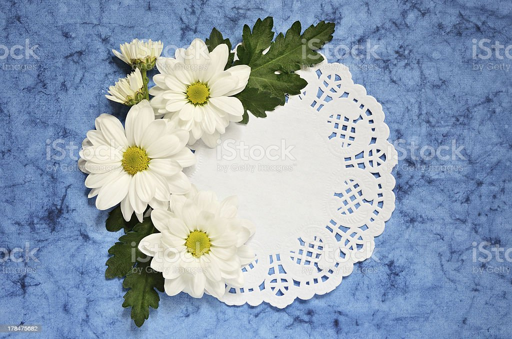 Chamomile arrangement on blue paper royalty-free stock photo