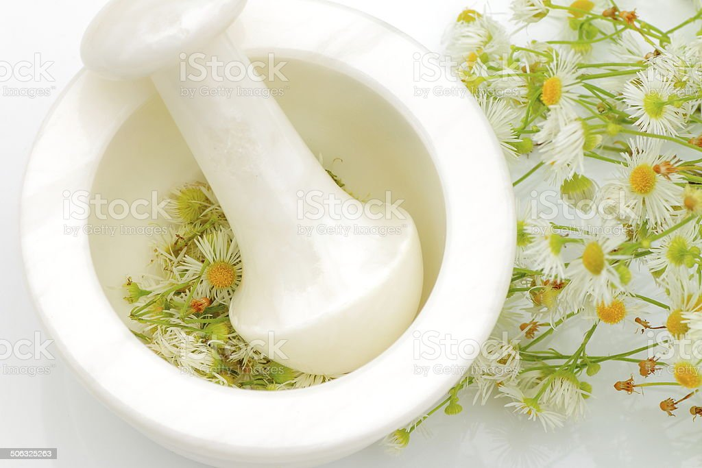 Chamomile flower virtues stock photo