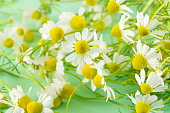 Chamomile flowers close up on against green background