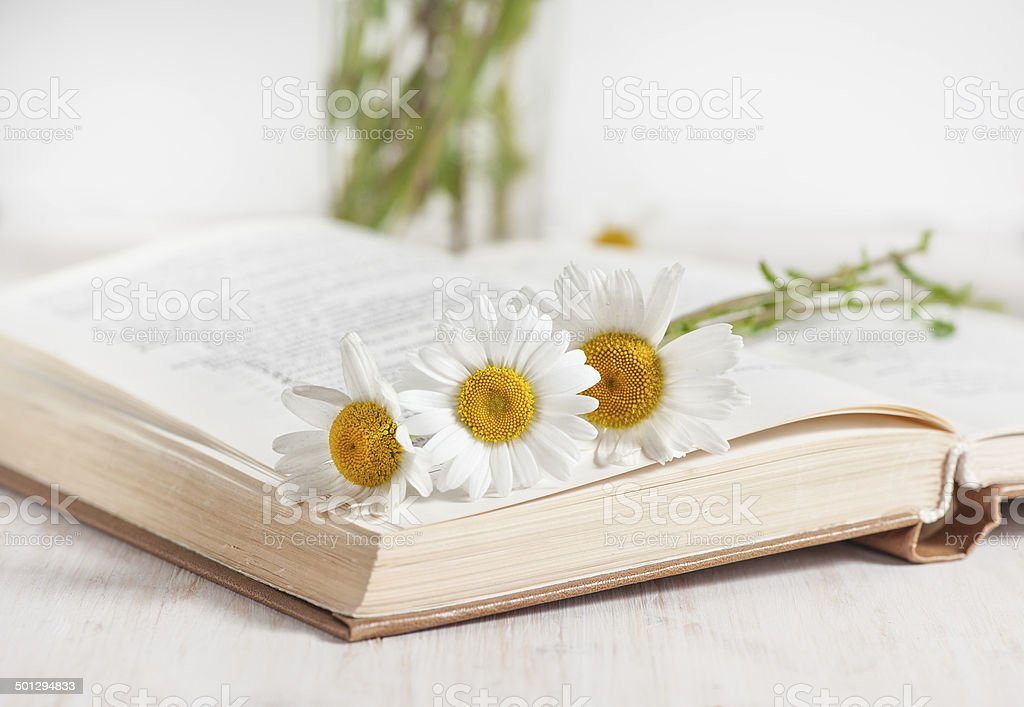 Chamomile flowers in open book stock photo