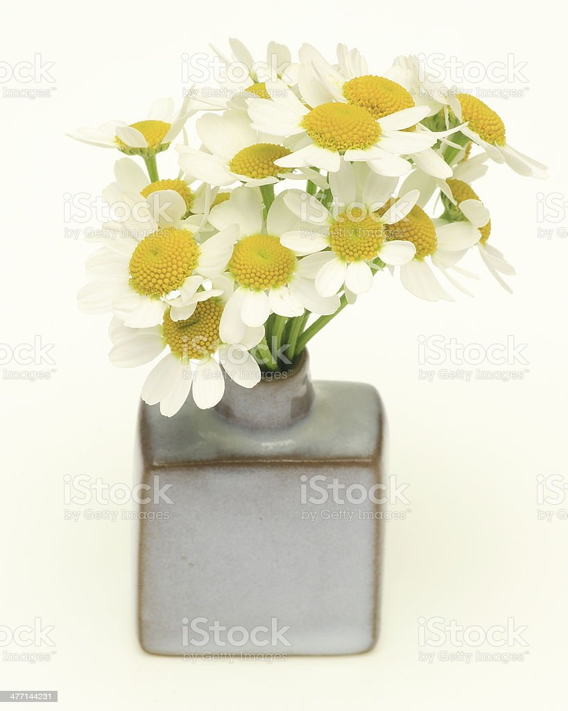 Chamomile in a vase royalty-free stock photo